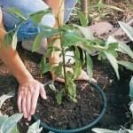 Zahradní tipy a vychytávky pro každého